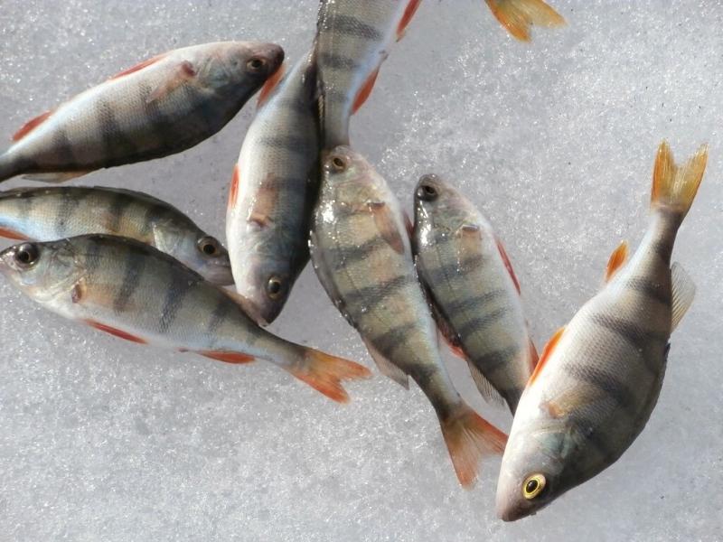 Когда рыба не будет клевать на безмотылки