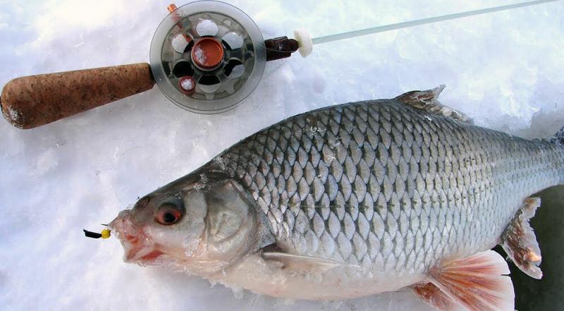 Последний лед. Где искать рыбу, как и на что ловить?