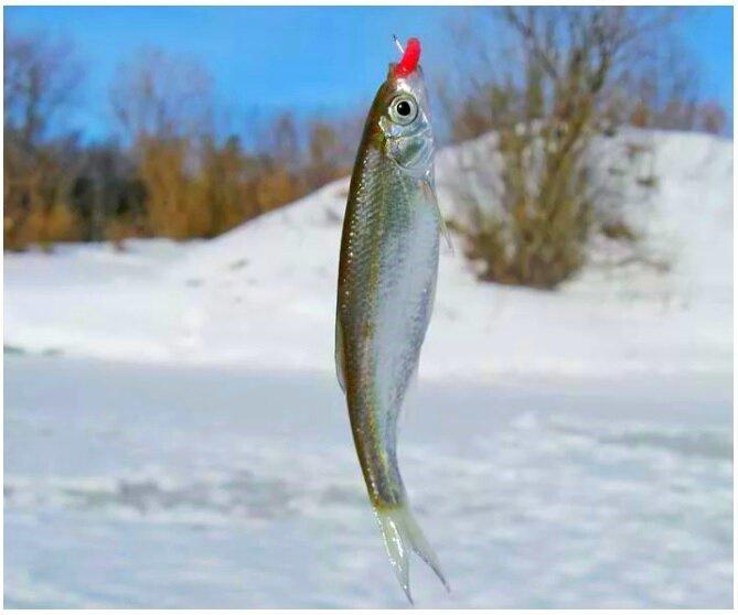 Рыбалка по последнему льду. За жемчужной рыбой уклейкой