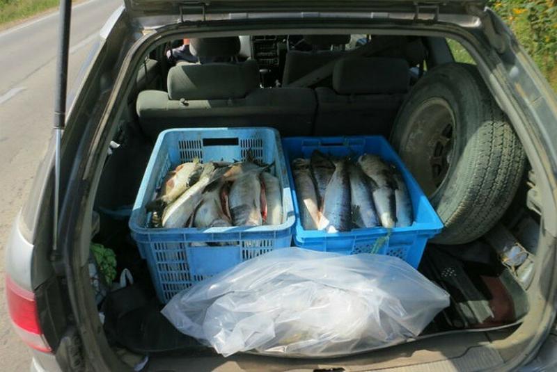 Сколько рыбы можно везти в машине с рыбалки и нужно ли доказывать, сколько дней провёл на водоёме?