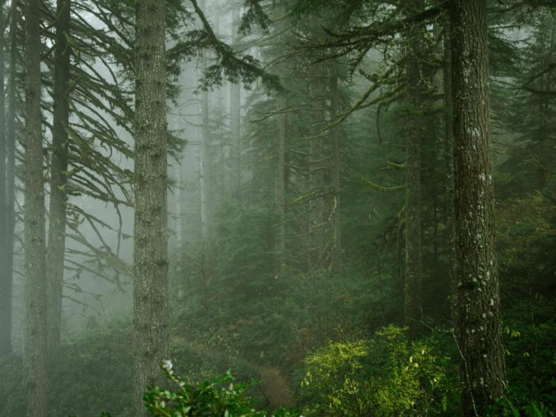 Советы охотникам: Что делать, если вы заблудились в лесу?