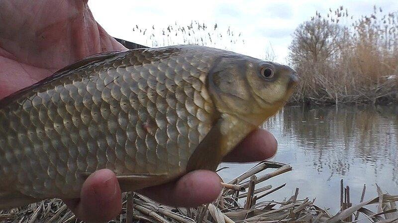 Уловистая насадка для белой рыбы, которую мало кто применяет