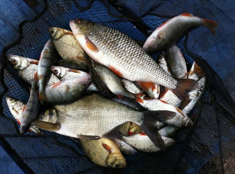 Без чего не будет хорошего клева - это должен знать каждый рыболов