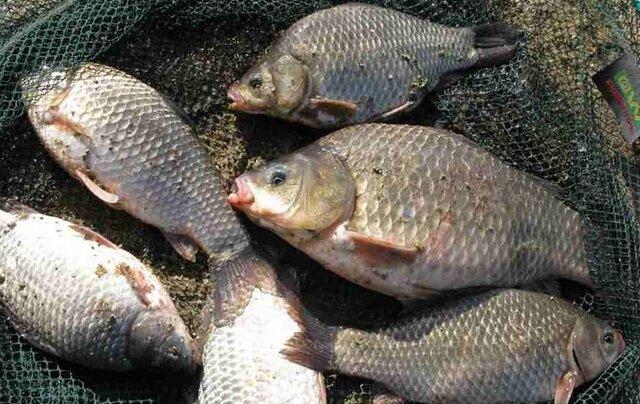 Дед рыбак посоветовал уловистую насадку - манная болтушка, только в 10 раз лучше