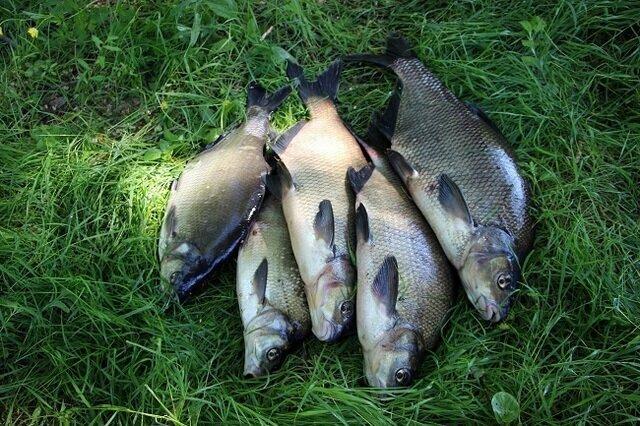 ХИТРЫЙ способ рыбку приманить к своей лунке, смотрите...