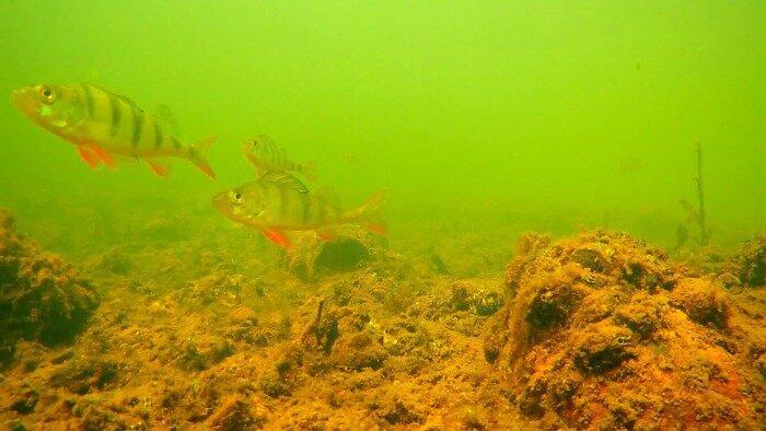 Как в разы увеличить улов на зимней рыбалке?! Интересная снасть, которая не оставит шансов рыбе