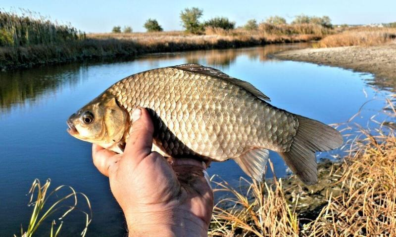 Ловля карася в апреле. Секрет успешной рыбалки от опытных рыбаков.