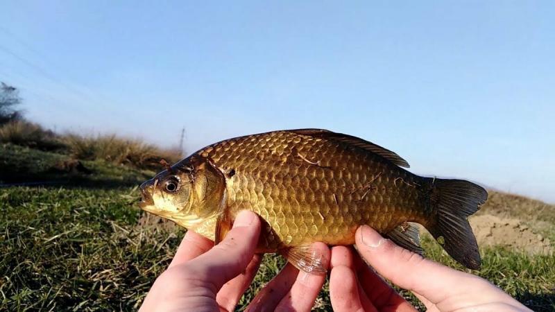 Ловля карася весной. Место, прикормка и наживка для трофейной рыбалки.