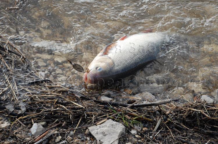 Лучшие приманки для ловли рыбы на спиннинг весной