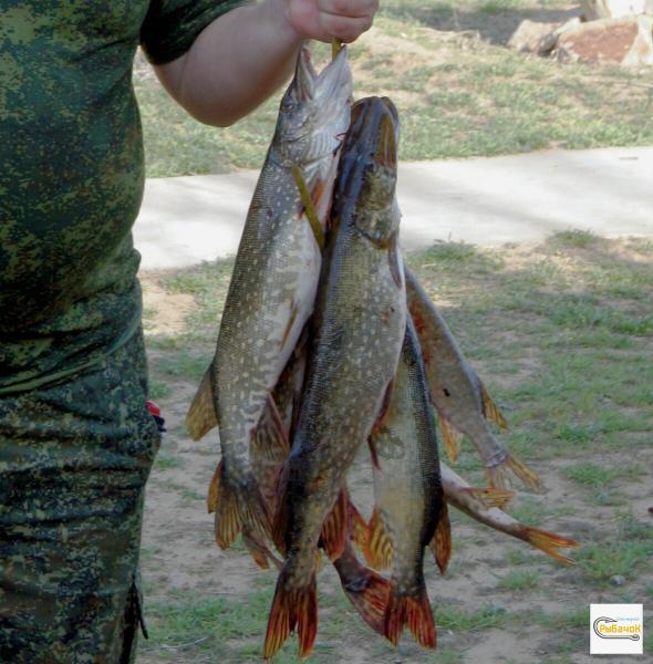 Нужен ли рыбаку активатор клёва.