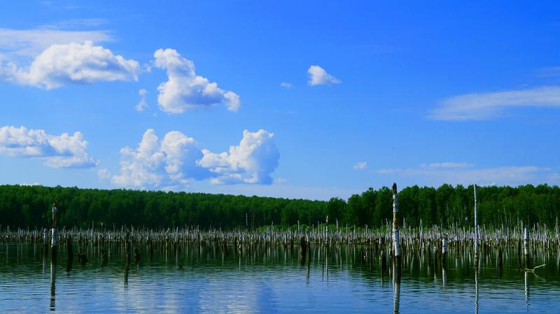 Окунь леса...