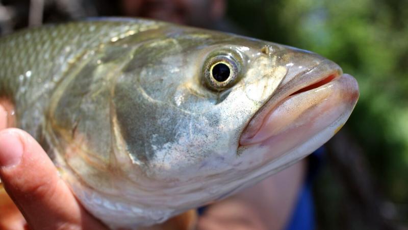 Простейшая снасть, на которую рыба порой ловится лучше, чем на любые современные оснастки