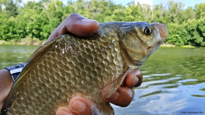 Простейшие насадки для рыбалки, на которые рыба может клевать лучше, чем на червя, опарыша, перловку, кукурузу и т.д.