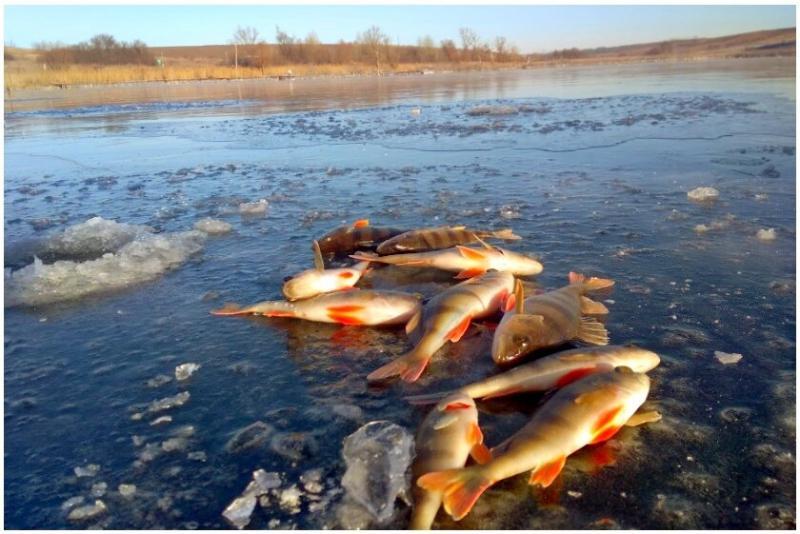 Рыбалка на ранневесеннего окуня. Мормышки, проводки и тактика ловли