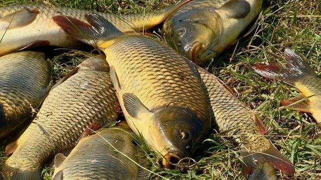 Секретный рецепт насадки, которая привлекает очень крупную мирную рыбу