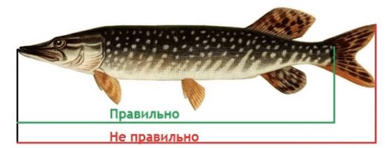 Список рыб, которых можно ловить без ограничений по новому рыболовному закону