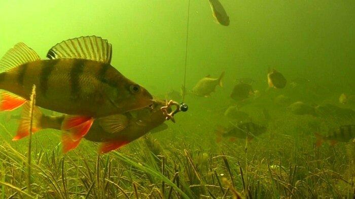 Заметки зимнего рыболова. Как собрать всю рыбу у своей лунки