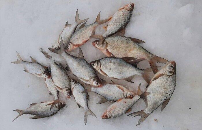 Зимняя донная снасть, которая ловит рыбу весь зимний сезон. Подледный фидер.