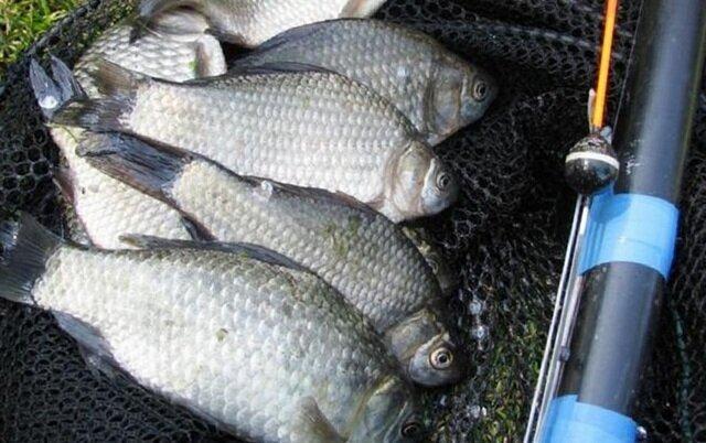 Знатная прикормка на весеннего карася - рыба отлично отзывается и приносит ощутимые результаты