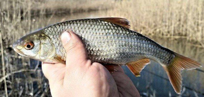 3 совершенно несъедобные насадки, которые ловят белую рыбу