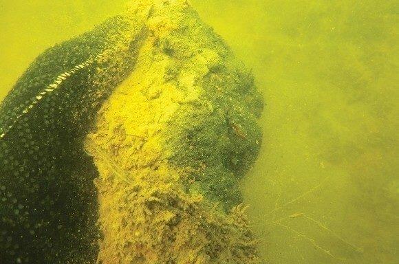 8 мест обитания карпа в водоеме: там его точно есть смысл ловить!