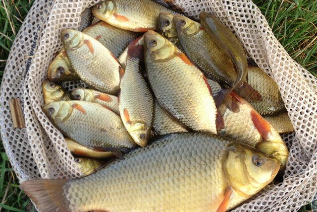 Домашний ароматизатор для рыбалки, на запах которого весь карась приходит