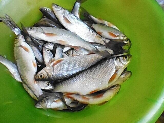 Интересный случай с рыбалки