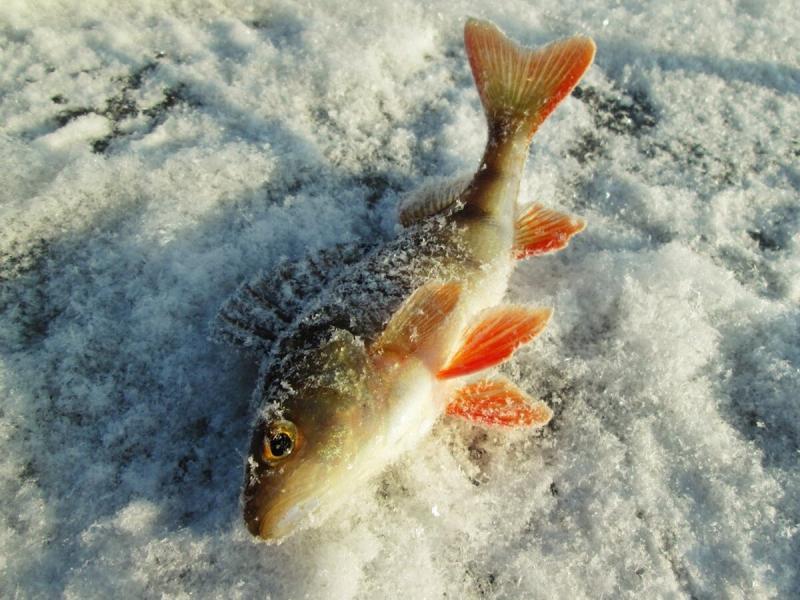 """Необычная приманка, которая может обловить любые мормышки. """"Снеговик"""" для ловли ленивой рыбы"""