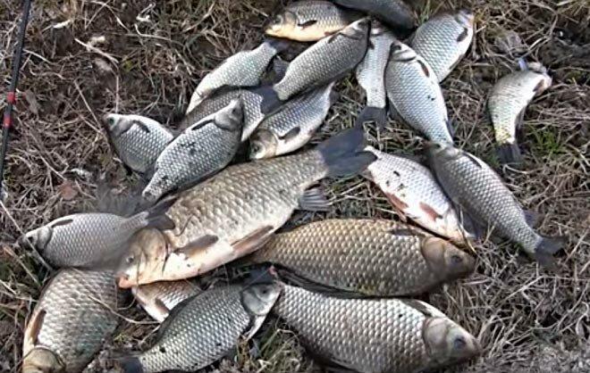 Особенности рыбалки ранней весной на карася. Как на что и где его ловить?