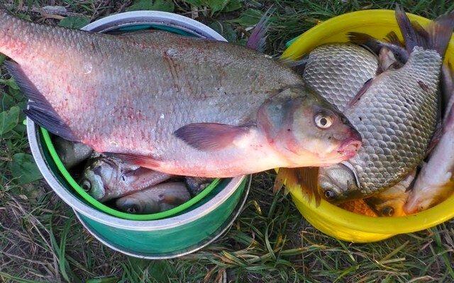 Отличный самодельный ароматизатор-приманка на карася - с рыбой всегда