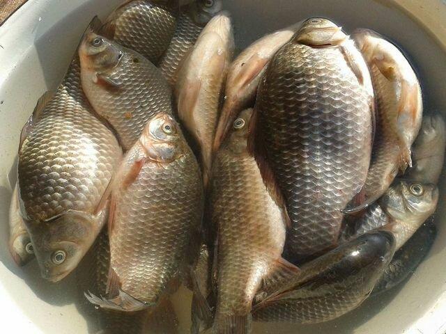 Подборка рецептов уловистого теста для рыбалки на мирную рыбу, которое всегда выручает