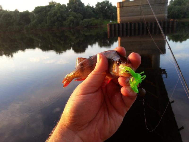 Прекрасная рыбалка