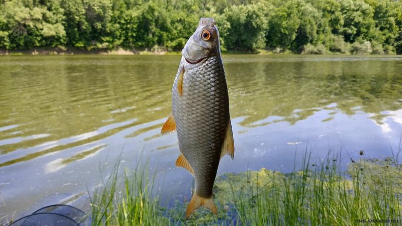 Рецепт прикормки, которая поможет собрать столько рыбы, что насадка не будет успевать дойти до дна