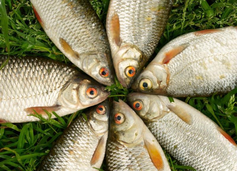 С хитринкой и смекалкой без рыбы не останешься!