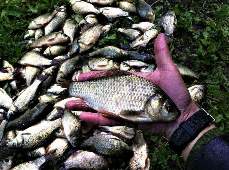 Старый рыболов рассказал простую хитрость, благодаря которой у него всегда полный садок карася