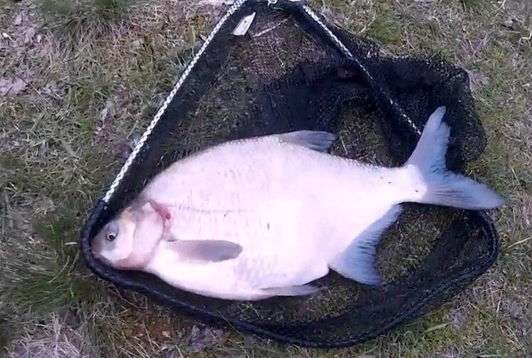 Стоит ли много кормить рыбу на фидерной рыбалке.