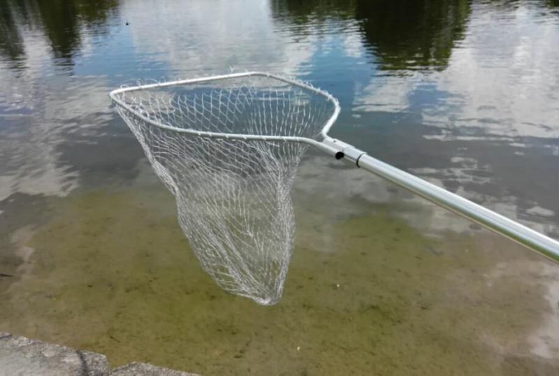 Трофей и нервы сбреги, рыбак: идешь на ловлю – бери с собой подсак!