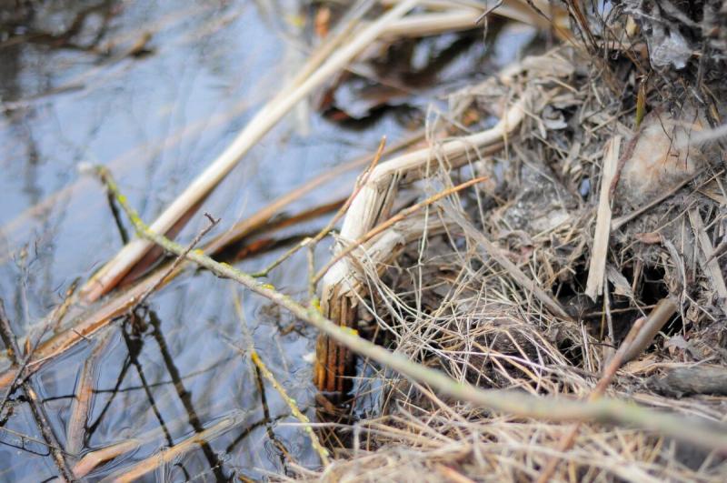 Во что превратилась речка, на которой прошла рыбалка моего детства