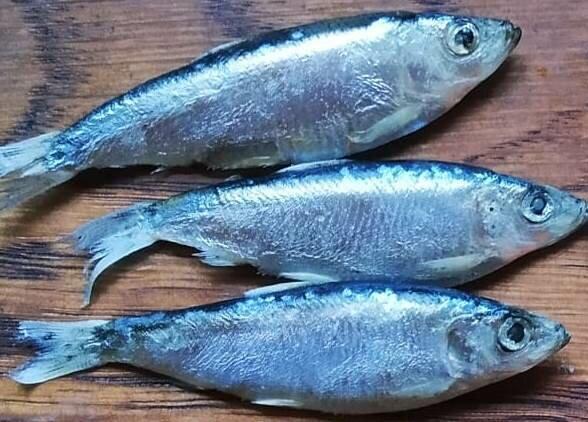 Известная рыба наших рек, которую покупают многие рыбаки, но сами не ловят. Какая она на вкус