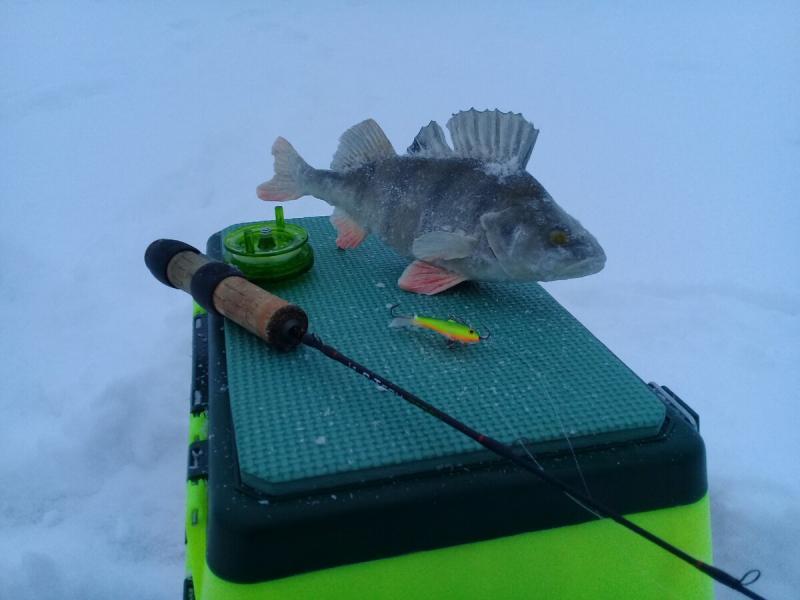 Как поймать окуня на балансир зимой? Тактика поиска и техника ловли.