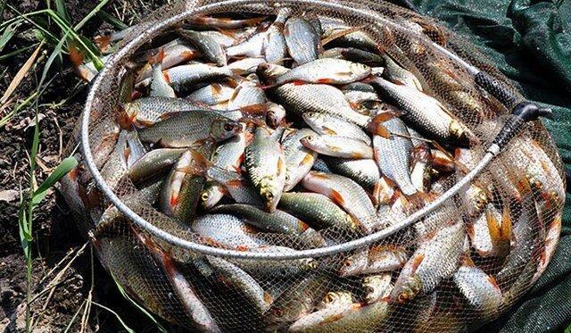 """Нашёл """"безумный"""" активатор клёва на всю мирную рыбу - несколько капель и вся рыба на точке - даже без прикормки набрасывается"""