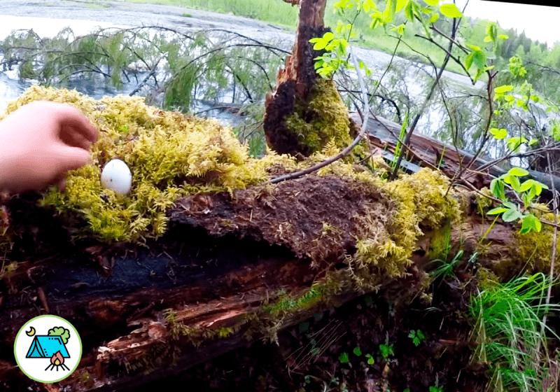 """Расскажу как мы проводим тренировку выживания в лесу. Мох """"кастрюля"""", кора дерева заменит посуда, а гриб защитник от комаров."""