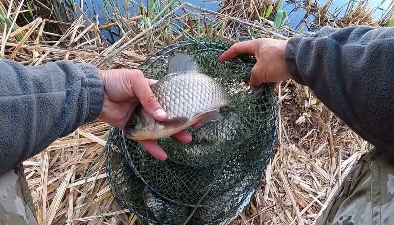 Рассказываю как сделать ароматную мастырку для ловли крупной рыбы