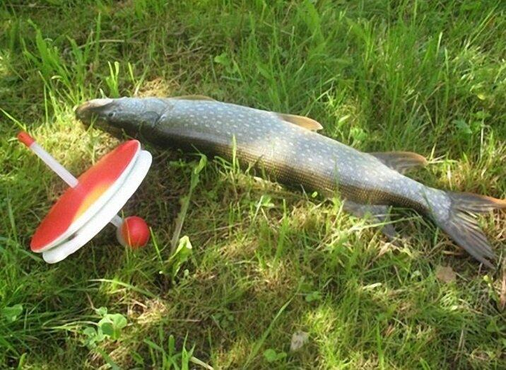 Рыбалка на кружки.