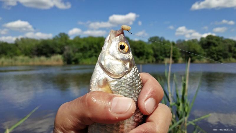 Ошибка многих рыболовов, устранив которую, можно ловить намного больше рыбы и крупнее