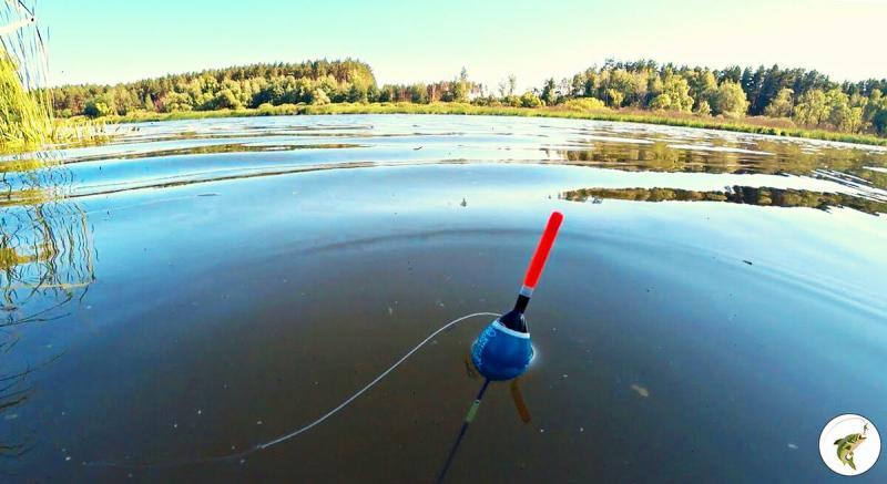 Ошибки при ловле на поплавок. Рыболов-спортсмен показал мне как ловить больше. Делюсь хитростями