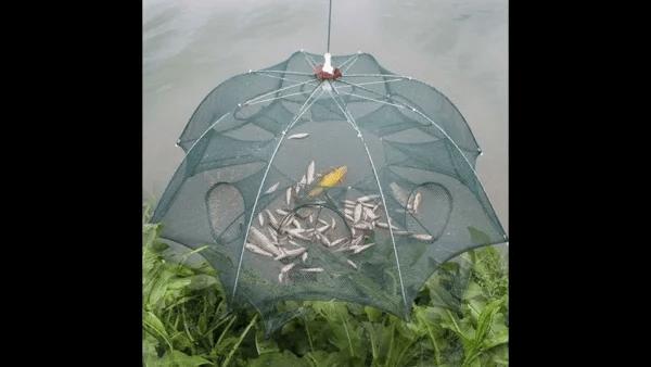 Рыбаки должны знать о нововведениях, которые вступают в силу с 2 июля.