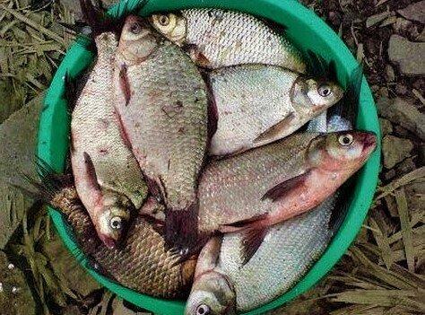 Всего одно изменение в снасти, увеличило мой улов вдвое - исправил ошибку, допускаемую большинством рыболовов