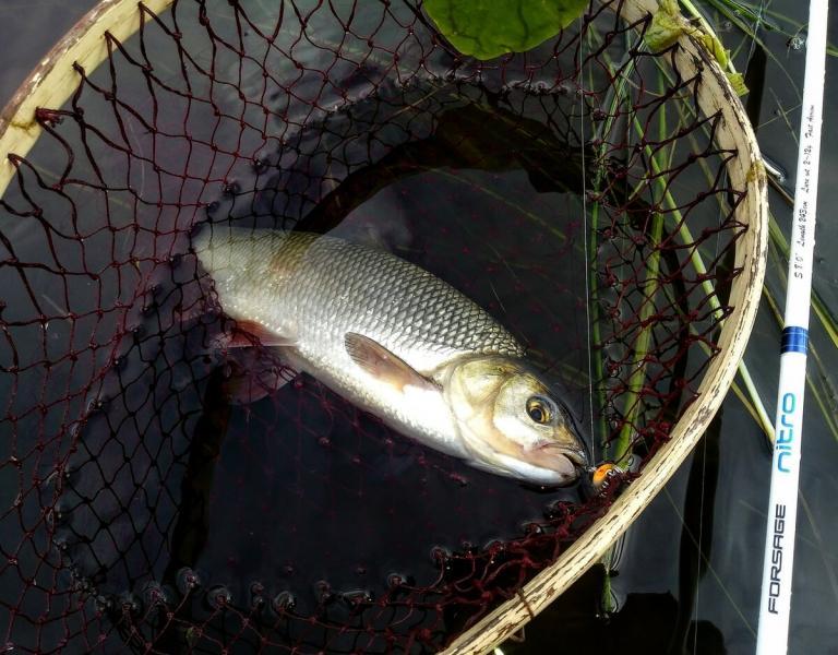 Некоторые рыбаки не берут с собой подсак, отчего это происходит