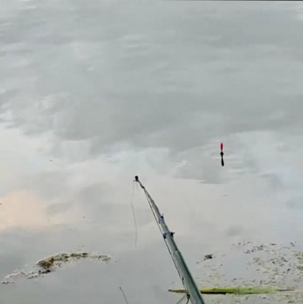 Попробовал прикормку, которая за 15 минут собрала рыбу в месте лова и заставила клевать.